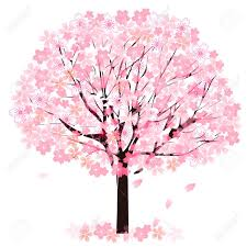 cherry blossom tree royalty free cliparts vectors and stock