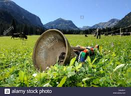 cow bell lying in a meadow for decoration of the cows for the