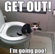 Funny Kitten Memes - get out funny kitten meme