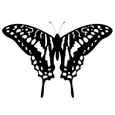 wallpaper kupu kupu hitam putih butterfly animal insect free image on pixabay