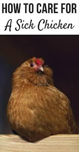Best Backyard Chicken by 1075 Best Images About Chicken U0027s For Fun On Pinterest Backyard