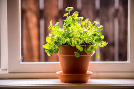 Plants That Don T Need Natural Light by Growing Plants Indoors 29 Tips For Houseplants Reader U0027s Digest