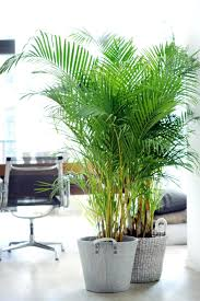 office design ferns in the bathroom tropical office plants