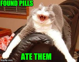 Crazy Cat Memes - crazy cat found pills imgflip