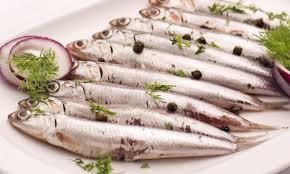 poisson à cuisiner comme un poisson dans l eau 7 recettes pour cuisiner les anchois