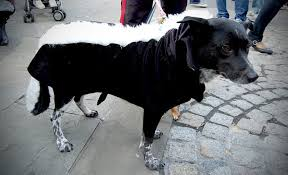 Ewok Dog Halloween Costume 15 Minute Costume Ideas Pet 20