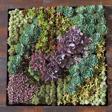 growing a vertical wall garden of succulents living walls and