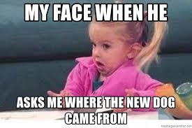 Little Girl Face Meme - my face when he asks me where the new dog came from little girl