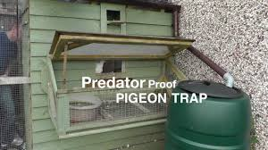 privacy policy u2014 loom analytics pigeon door u0026