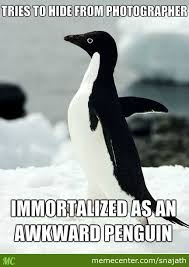 Penguin Memes - and that kids is how socially awkward penguin was born by snajath