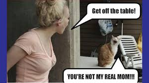 Bad Kitty Meme - 4 tips for a healthier cat funny pet stop hilarious animal