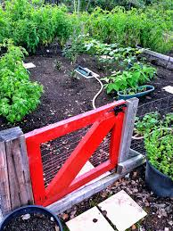 3 easy gardening tips that will help your hawaii garden flourish