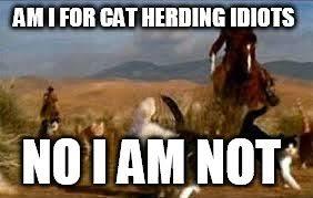 Herding Cats Meme - herding cats imgflip