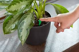 amazon com miracle gro indoor plant food 48 spikes