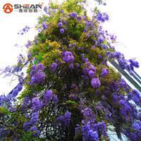 ornamental flowering trees uk free uk delivery on ornamental