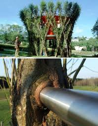 arboreal architecture taking inspiration from trees growing