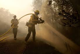 California Wildfires Pets by The Latest California Wildfires Bring Record 31 Deaths Latest