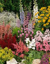all about perennial plants great site with lots of pictures and
