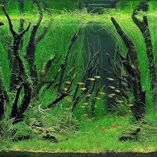Aquascape Designs For Aquariums Interesting Driftwood Placement Aquascapes Pinterest