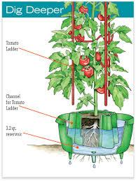 tomato halos for watering u0026 cutworm control gardener u0027s supply