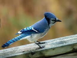 89 best birds of michigan images on pinterest michigan backyard