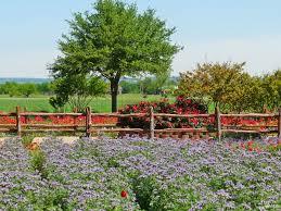 Artful Gardens Fredericksburg Texas Culture Blog