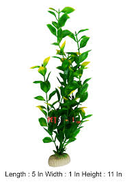 aquarium plants best quality at discounted price only at