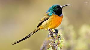 picture of bird qygjxz