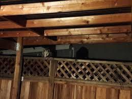 possum in my backyard album on imgur