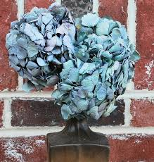 dried hydrangeas dried hydrangea flower bunch blue color hydrangea flowers