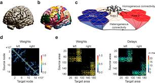 selective activation of resting state networks following focal