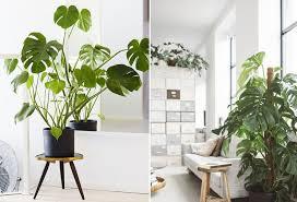 plantes bureau les plantes exotiques pour votre intérieur laquelle choisir la