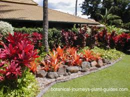 tropical landscaping ideas for front yard google search an al