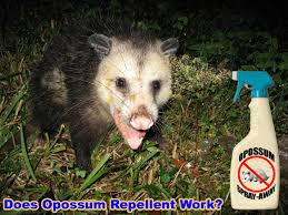 Can You Bury Animals In Your Backyard How To Keep Away Opossums From Your Yard House Property