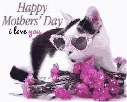 mothers day gifs cat s day gifs wifflegif