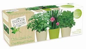 indoor herb garden seed kit gift grow your own box trio herb