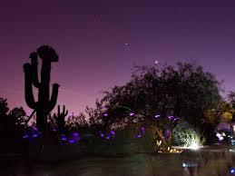Scottsdale Botanical Gardens Flashlight Tours At The Az Botanical Gardens Az Things To Do