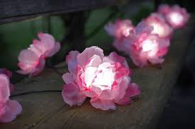 Rose Lights String by Solar String Lights 10 Pink Roses Capital Gardens