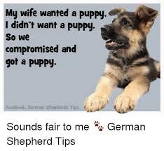 Funny German Shepherd Memes - new puppy german shepherd memes puppy best of the funny meme