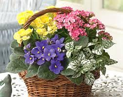 Flower Shops In Downers Grove Il - phillip u0027s flowers chicago florist in naperville wheaton la