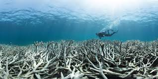 as coral bleaching goes global scientists fear worst is yet to
