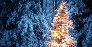 lighted christmas trees christmas day 25