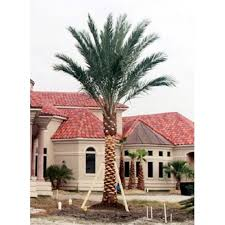 wholesale palm trees for sale in arlington