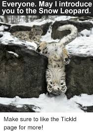 Memes About Snow - everyone may i introduce you to the snow leopard make sure to like