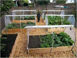 Garden Allotment Ideas Small Vegetable Garden Designs Best Vegetable Garden Layouts Ideas