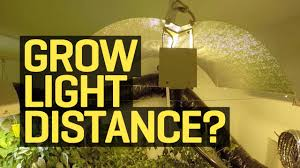 best light to grow pot how far should my growlight be from my plants youtube