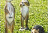 meerkat solar light garden ornaments buy solar powered garden