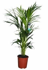 green plants green plants florastore