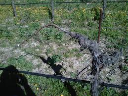 vineyards production blog