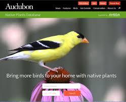 pennsylvania native plants list gardening help from audubon native plants database